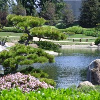 Japanese-garden-overview